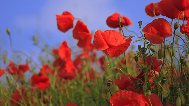 Stories to Mark Remembrance Day in Schools